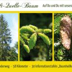 Kraft-Quelle-Baum